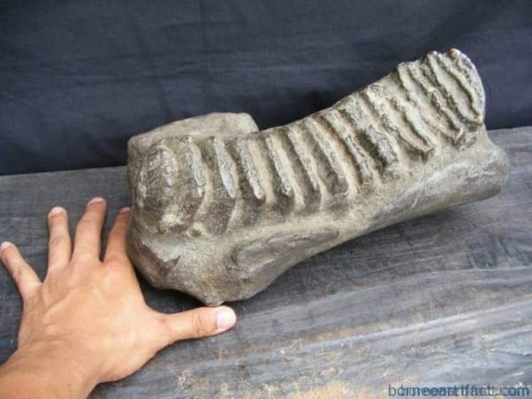 massivelbstegodonormastadonfossilbdinosaurmegalodonorganicremains