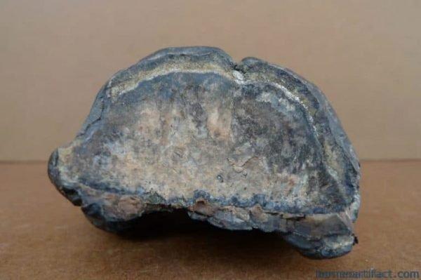 AUTHENTICFOSSILmm/.STEGODON/MASTADONFossilsTeethBonePrehistoric